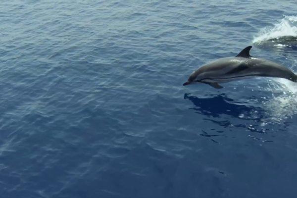 【イベント報告】6/7『プラスチックの海』(22分版)上映&シンポジウム